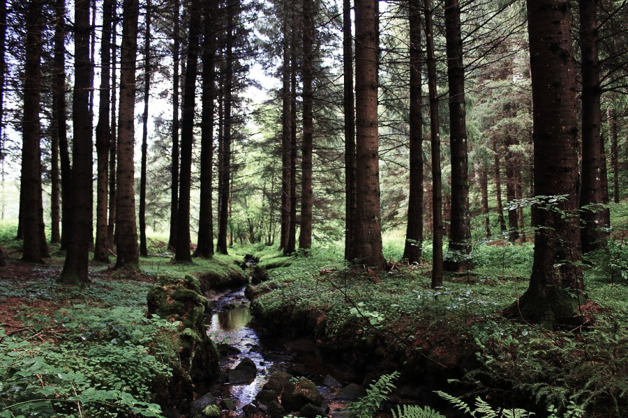 Magical Auvergne forest | Infinite belly