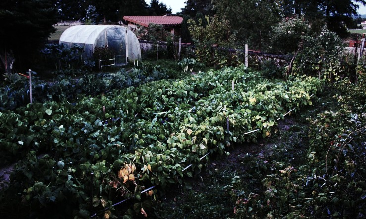 Neighbor's vegetable patch in Auvergne, France | Infinite belly