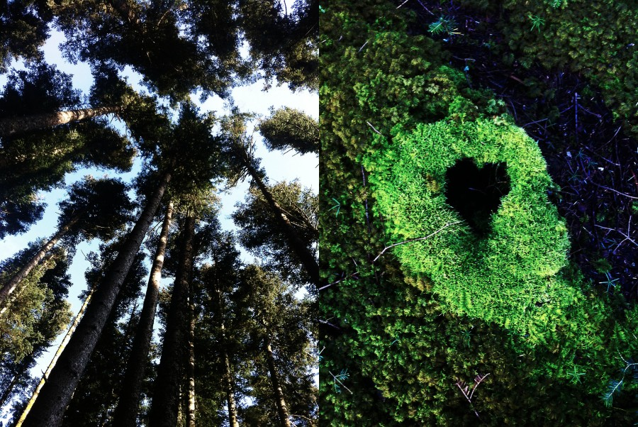 Heart shape in the forest | Infinite belly