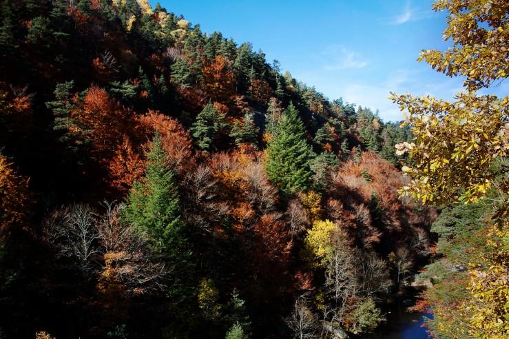 Autumn in Auvergne | Infinite belly