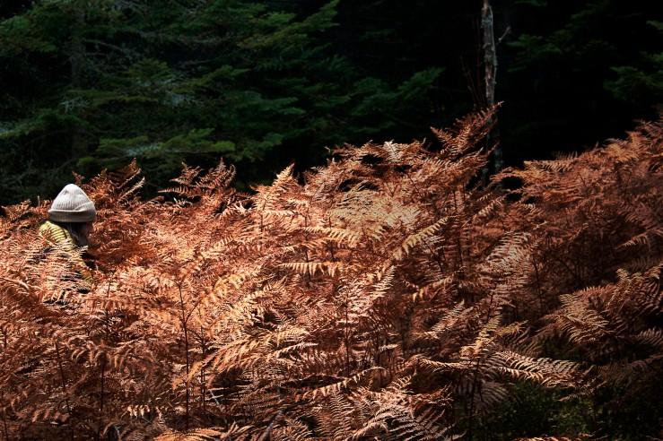 Auvergne forest & ferns | Infinite belly