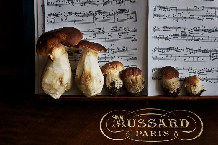 Foraged porcini mushrooms | Infinite belly