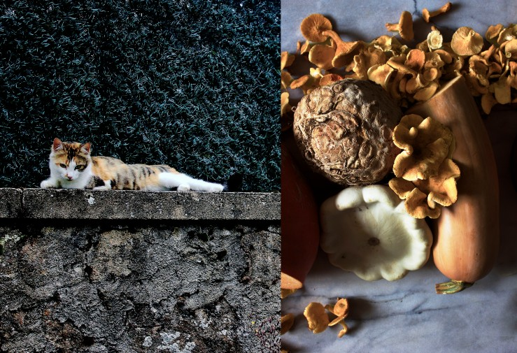 Our cat Frida & fall harvest chanterelles & squash | Infinite belly