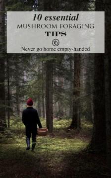 10 essential mushroom foraging tips | Infinite belly