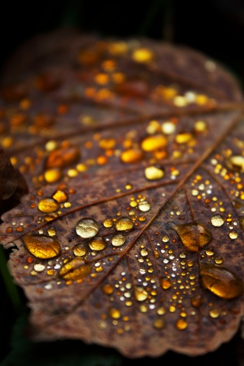 Iridescent leaf | Infinite belly