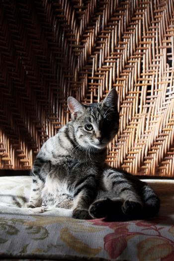 Boris the cat | Infinite belly