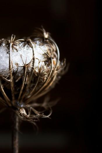 Frost in flower | Infinite belly