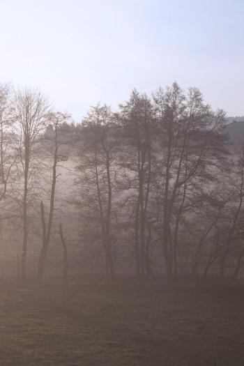 Misty morning |Infinite belly