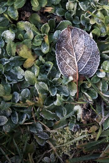 Frozen leaf in the garden | Infinite belly